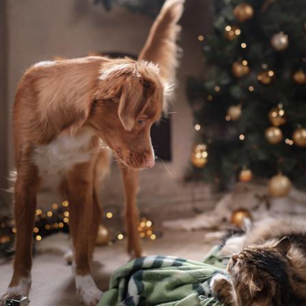 """""""PetCity"""" atvėrė duris internete: nemokamas pristatymas, dovanos ir daugiau nei 3 tūkst. prekių"""