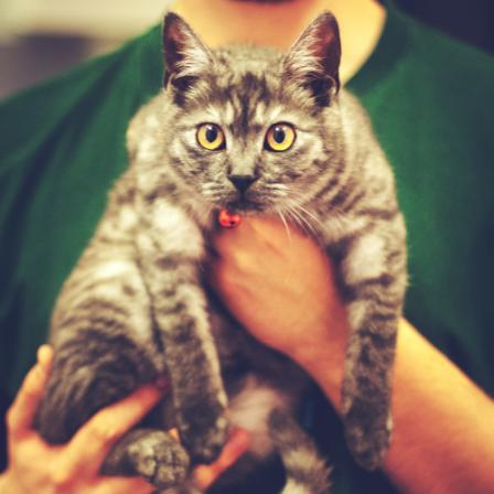 Pirmas vizitas pas veterinarą: būtini skiepai ir vaistai, įsigijus augintinį