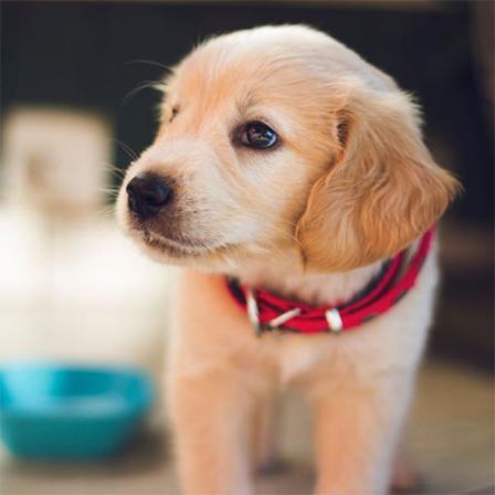 Namuose – naujas augintinis? Veterinarė pataria, ką reiktų žinoti apie šuniuko ar kačiuko priežiūrą