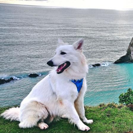 Kelionių ambasadoriumi tapusio Aiso šeimininkė: ką reiktų žinoti planuojant išvykas su šunimis?