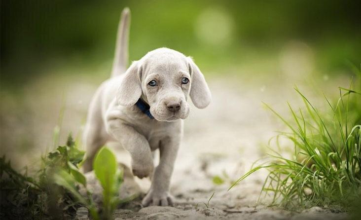 Antiparazitinės priemonės jauniems šuniukams ir kačiukams: kurias ir kada galima pradėti naudoti?