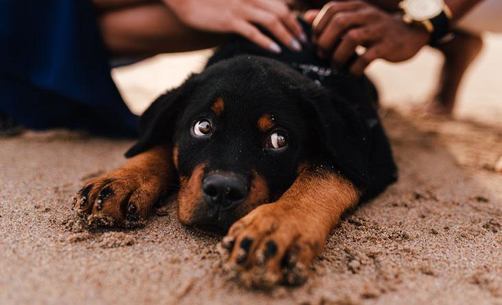 Alinantis karšis – išbandymas keturkojams: veterinarijos gydytoja pataria kaip atpažinti perkaitusį gyvūną ir kaip jam padėti