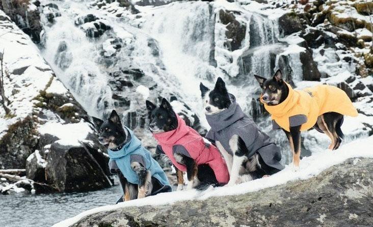 Gyvūnų aprangos TOP naujienos – kad drėgmė ir šaltis netrikdytų žiemos džiaugsmo