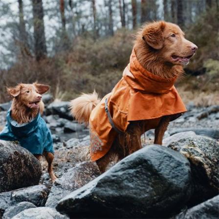 Spalvingos striukės ir paltai šunims: apie sezono mados tendencijas, ir kodėl juos rengti – būtina