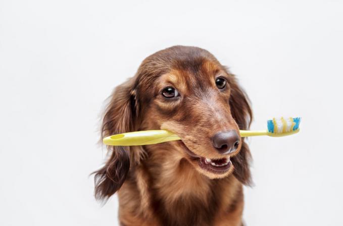 Niekada nevalėte dantų savo augintiniui? Metas apsilankyti pas veterinarą