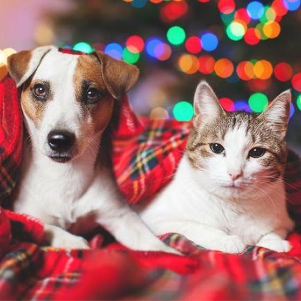 Kalėdinių dovanų idėjos augintiniui: kas pradžiugintų mylimus šunis ir kates?