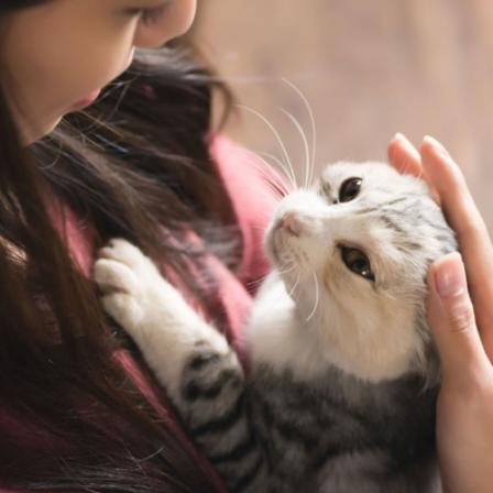 Virusai kerta ne tik žmones, bet ir augintinius: kokie pavojingiausi katėms?