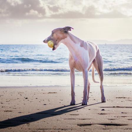 Kaip atvėsinti šunį vasarą?