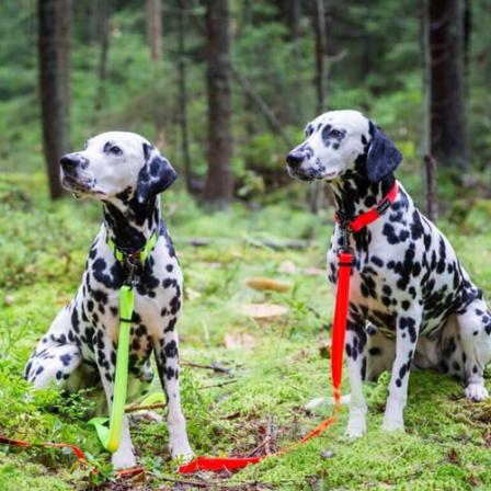 Kaip išsirinkti tinkamą pavadėlį šuniui?