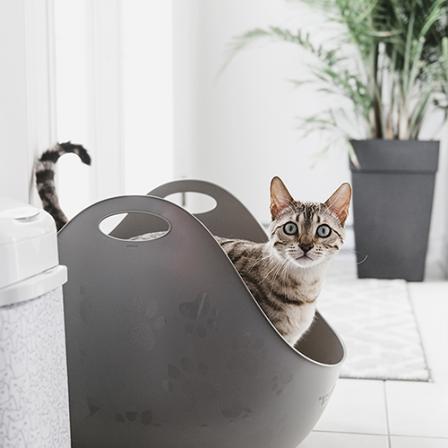 Kaip išmokyti kačiuką naudotis kraiko dėžute?