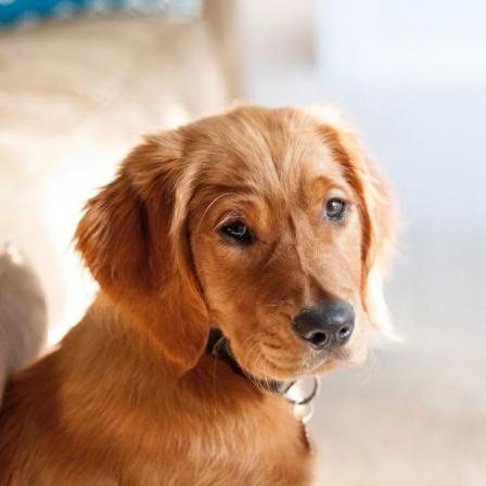 Augintinių nukirminimas: veterinarės komentaras, kodėl tai aktualu ištisus metus