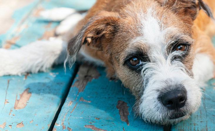 Nuodai šunų aikštelėse ir kiemuose: kaip apsisaugoti nuo blogiausio scenarijaus?