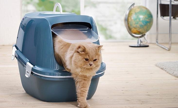 Kaip išrinkti tinkamą kraiko dėžutę savo katei?