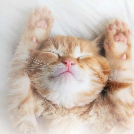 Pirkinių sąrašas kačiukams