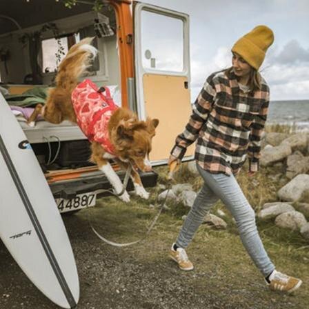Kad mūsų atostogos augintiniui netaptų išbandymu: kaip saugiai keliauti su gyvūnu