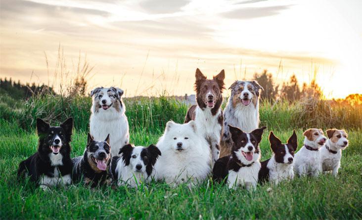 150 skirtingų veislių šunų aikštelėje – bet ar tai yra tikroji socializacija?