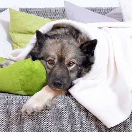Žmonių vaistai gyvūnams gali sukelti staigią mirtį