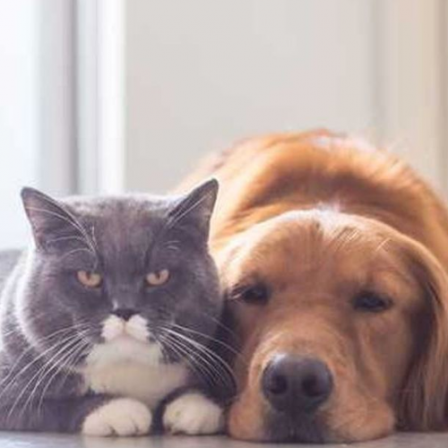 Ašarojančios šuns akys ir nevalingas kasymasis – alergijos signalas: ką darote ne taip?