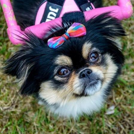 Jautri PetCity ambasadorės, stiliaus ir mados guru išrinktos Zuzės istorija: gyvūną gražų padaro ne veislė, o meilė